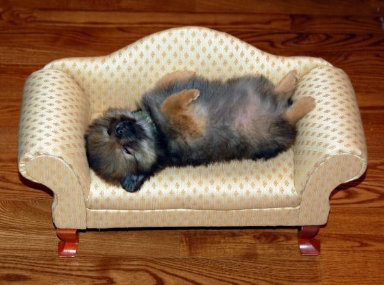 Puppy-sofa-cute